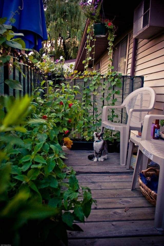 plantes grimpantes et fleurs sur le petit balcon
