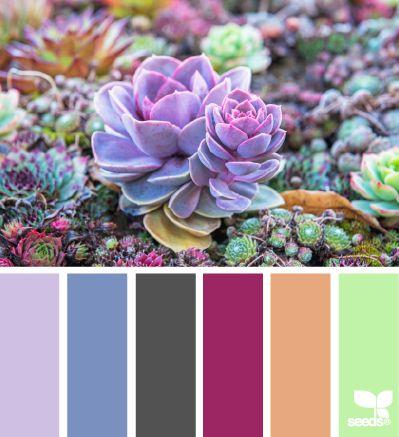 succulent color.
