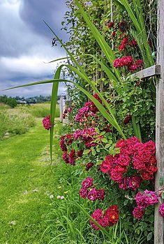 Alex Lyubar Fine Art Photography Photograph - My Fine Art Landscapes. Beautiful Spring Flowers by Alex Lyubar    #Spring#Flowers#RurelScene#