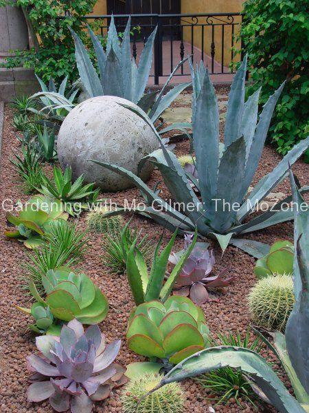 moplants.com suculento preto Aeonium Echeverias coleus escuro com abelia listrado …   – Landscaping