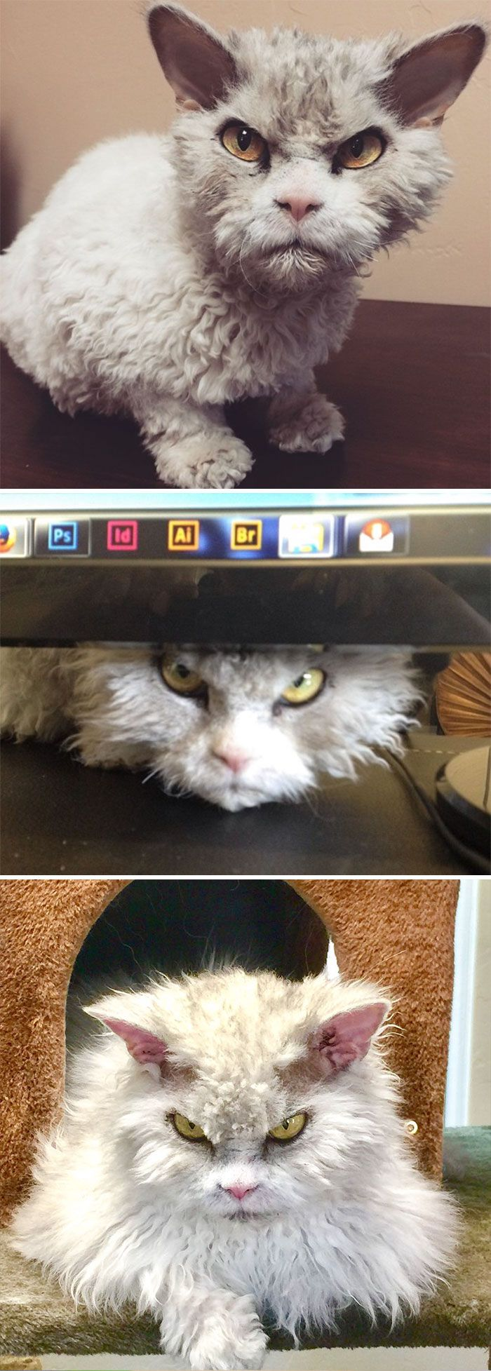 The Best Angry Cat No Ideas On Pinterest No Grumpy Cat - Garfi is officially the worlds angriest cat