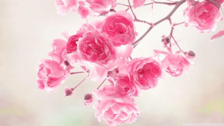 Pink_Roses_Flowers-Wallpaper [19201080]