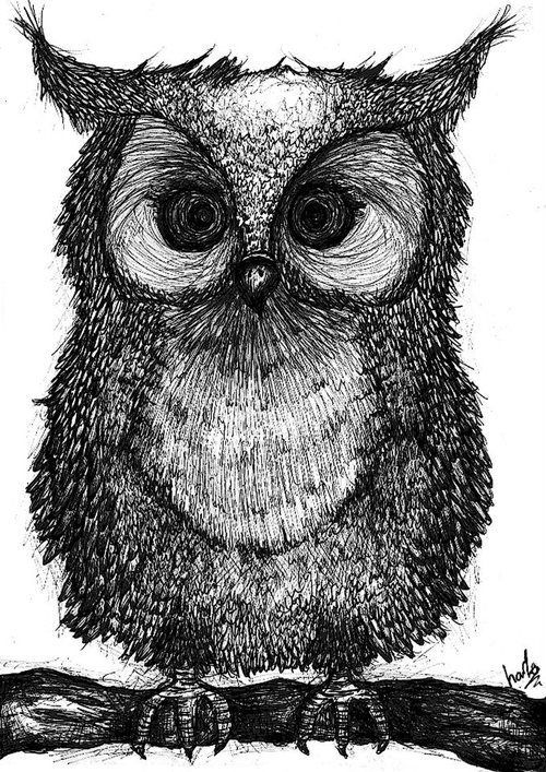 37 best reference drawing images on pinterest for Cool drawings of owls