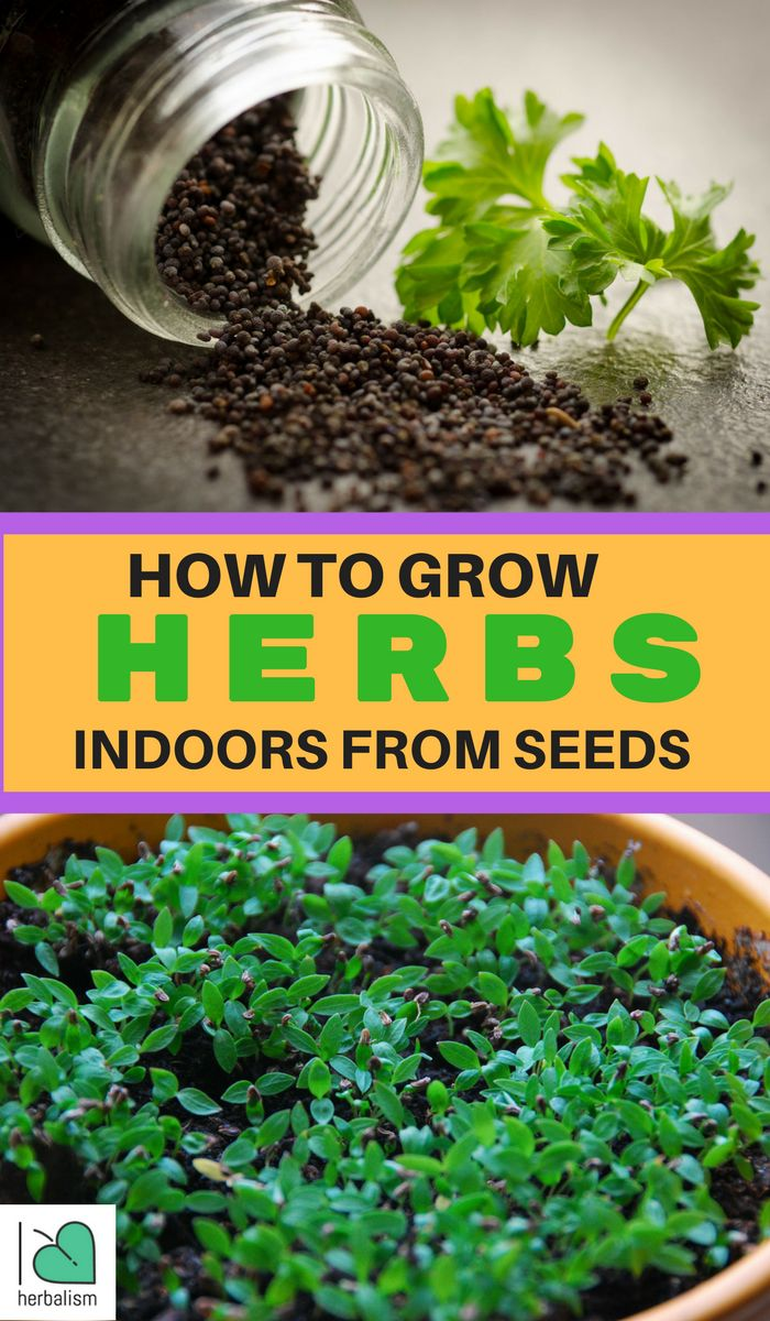 Learn How To Plant Seedlings Watch this great informative video on how to grow your own herbs indoors starting with the seeds. In this video, Lynn Weaver, Master Gardener, explains everything so nicely.