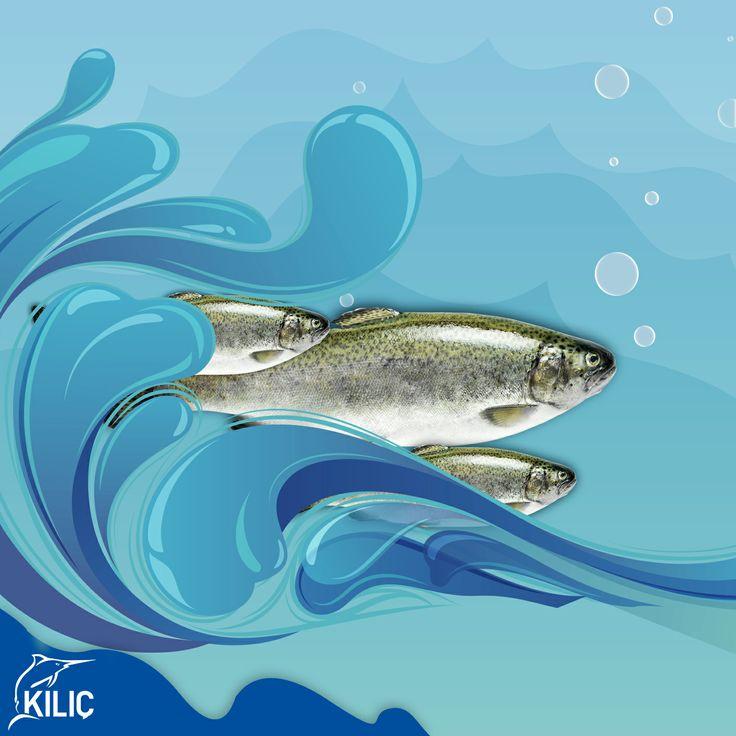 Alabalığın birçok türü vardır. Salmonidae familyasına ait olan Gökkuşağı Alabalığı gerçek memleketi ABD'nin kuzey batısı ve Kanada'nın güney batısı olan bir tatlı su balığı türüdür. 1882 yılında Kuzey Amerika'dan Avrupa'ya getirilmiştir.Lezzetli ve az kılçıklı etinden dolayı çok sevilir .