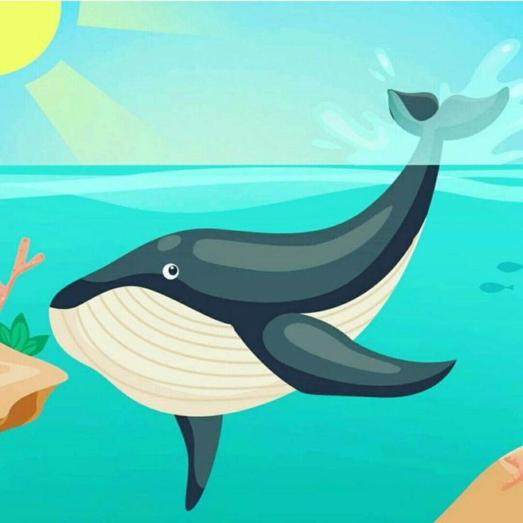 'What is William' is created and produced on the Sunshine Coast. It's a fun, interactive and educational children's book. The perfect book to educate children about Humpback Whales 🐋 www.borderandzola.com.au