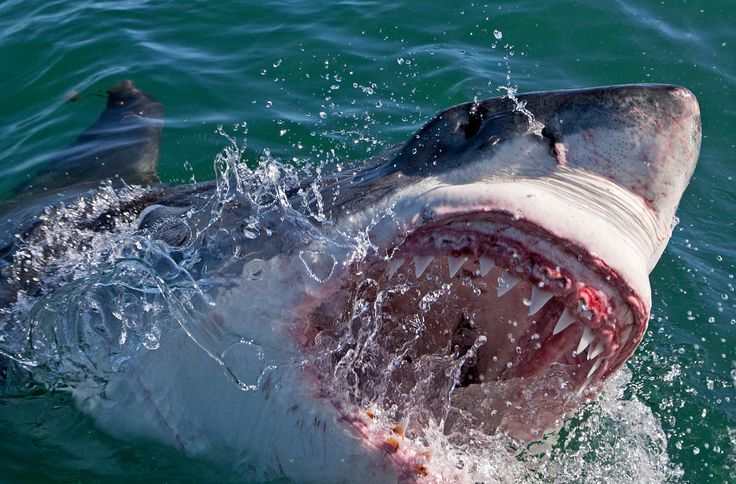 Let's make the first Monday of Shark Week a national work holiday. #Shark Week 2014
