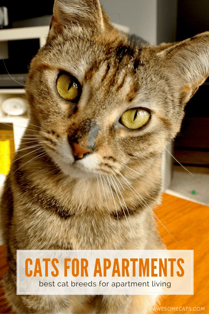 Viac ako 25 najlepÅ¡ch nápadov na Pintereste na tému Best cat
