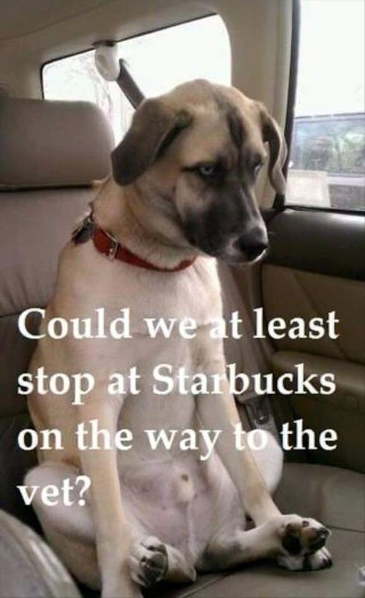Funny Animal Pictures Of The Day – 22 Pics                                                                                                                                                                                 More
