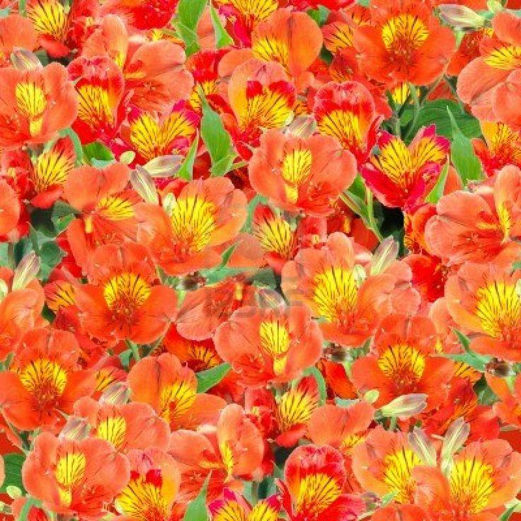 Abstracte achtergrond van oranje lelie bloemen en groene bladeren. Naadloze patroon voor uw ontwerp. Close-up. Studio fotografie. Stockfoto ...
