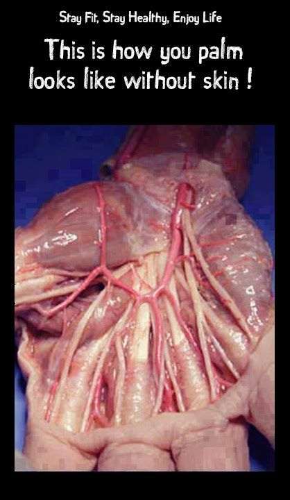 This is how you palm looks like without #skin ! #anatomy #human