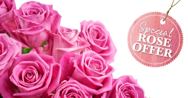 Winter is all about roses. Be sure to check out our exclusive BHG offer for bare-root roses this winter.