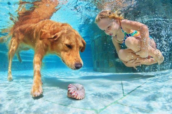 Golden retriever, labrador e cocker spaniel não têm qualquer problema em pular na água, mas algumas exigem atenção e cuidado do tutor