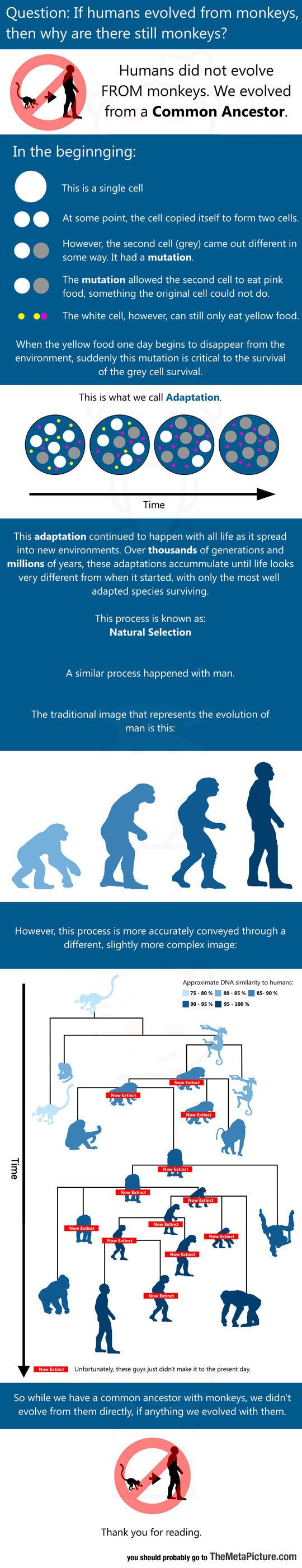 best images about student stuff writing an essay for those who believe humans evolved from monkeys science truthlife