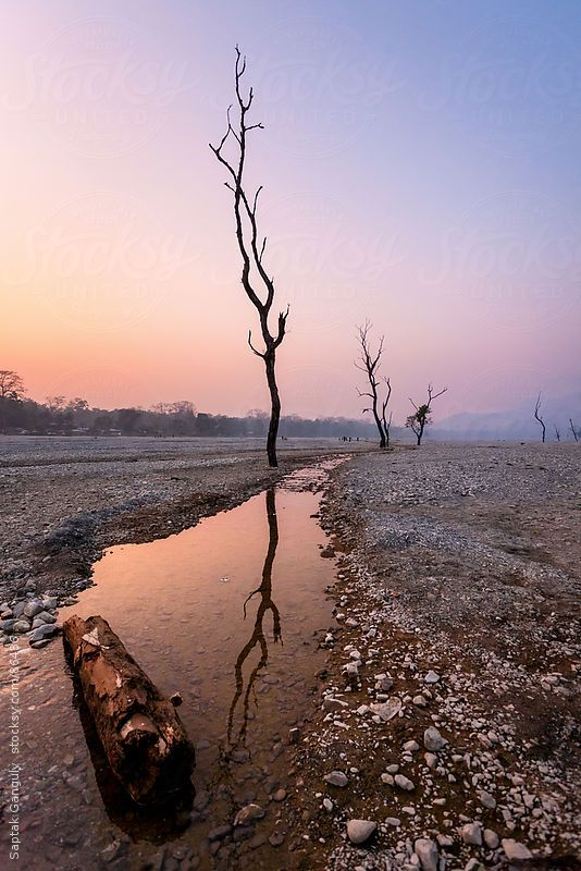 Reflection of a barren tree on a flowing stream at dusk by Saptak Ganguly