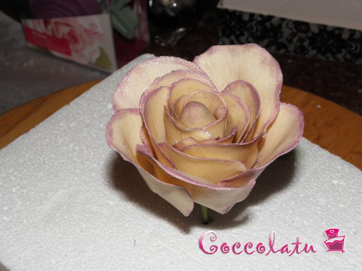 Prima prova di una rosa :P