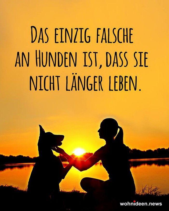 Sprüche Zitate Zum Leben Weisheiten Und Glück Hunde
