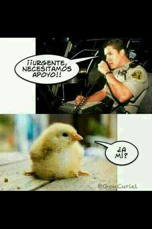 pollitoooo ^_^ lol!