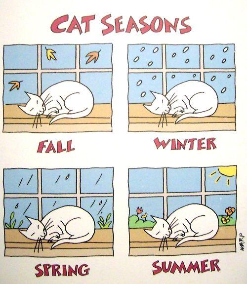 Cat Seasons: Cats, Cat Seasons True, Window, Funny, Cat Seasons Lol, Things, Kitties, Cat Toons, Animal