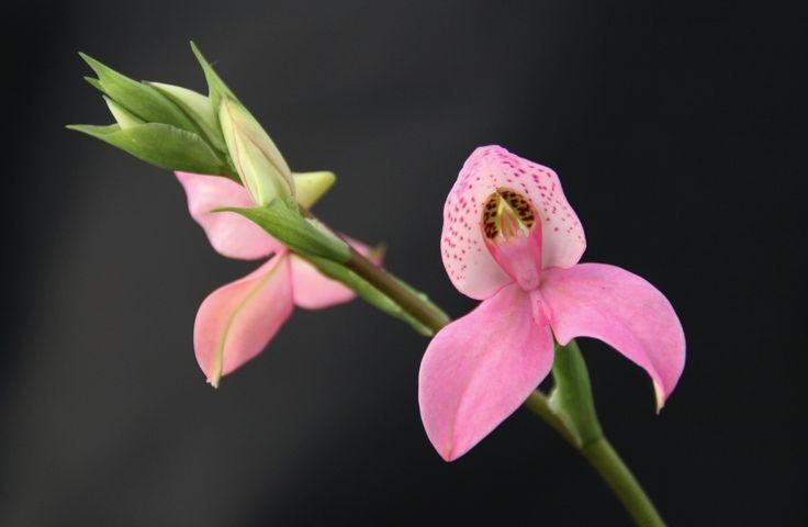 Conserver une orchidée