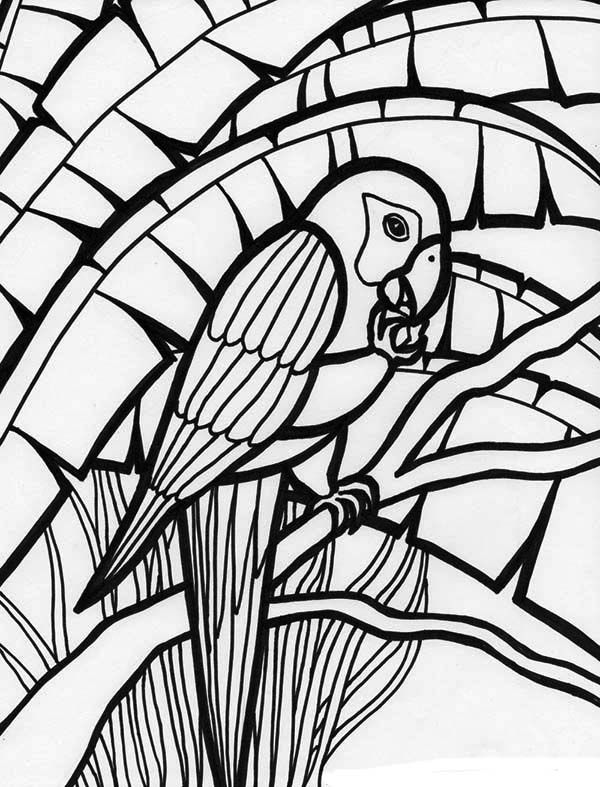 free cockatoo coloring pages - photo#28