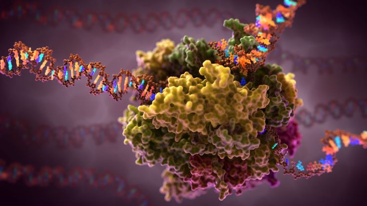 RNA Polymerase Transcription:  Scientific Illustration GIF                                                                                                                                                                                 More
