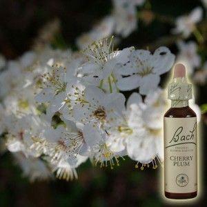 Cherry Plum/Prunier n° 06