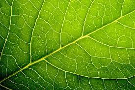 Resultado de imagen de leaves
