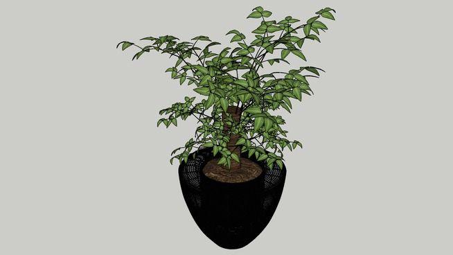 Plant - 3D Warehouse
