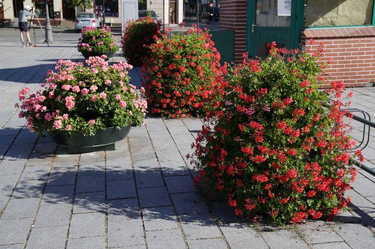 Terra Flower Power | Września