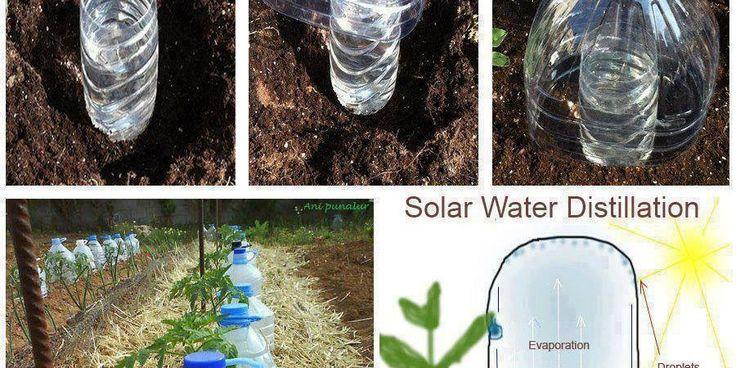Tecnica di irrigazione a goccia solare con le bottiglie di plastica!