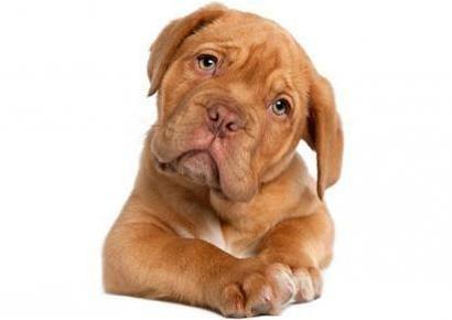 Глюкозамин и Хондроитин 500/400 мг за Кучета 120 дъвчащи таблетки на изгодна цена могат да заздравяват хрущялите и подобряват функцията на ставите на вашето куче. http://biomall.bg/hranitelni-dobavki-za-kucheta-kotki/glucosamine-chondroitin-gliukozamin-hondoitin-tabletki-za-kucheta-cena