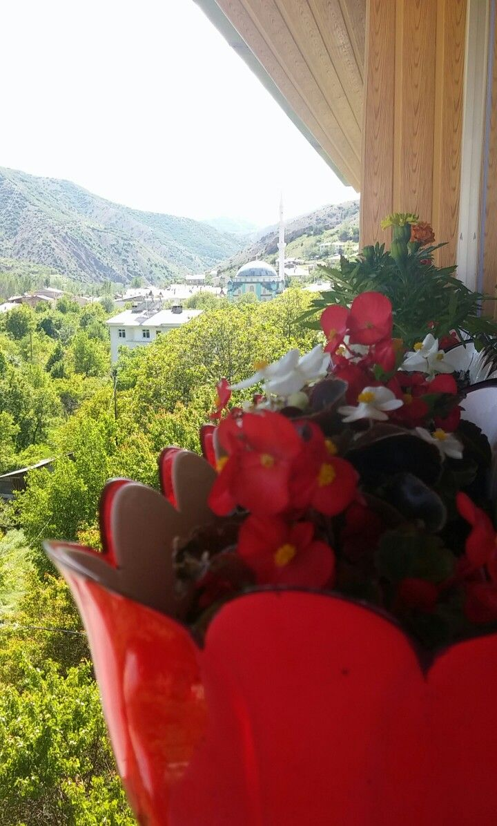 Flowers & Green...