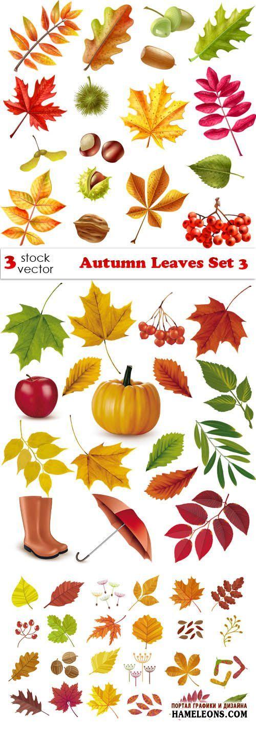 Осенние листья - векторный клипарт | Autumn Leaves Set 3