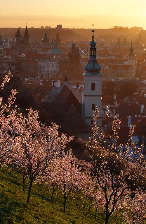 The spring in Seminarist Garden, Prague, Czechia