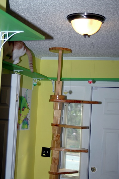 cat play rooms plans - Yahoo! Search Results