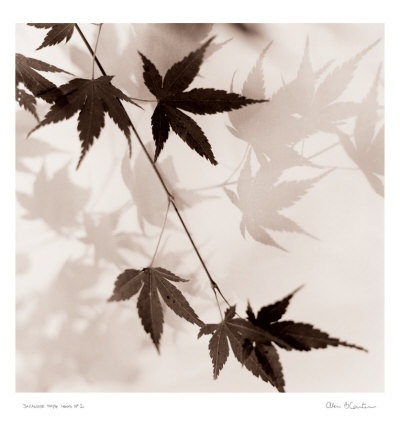 38 best images about chinese art on pinterest chinese Japanese maple leaf