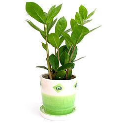 Die 25+ Besten Ideen Zu Exotische Zimmerpflanzen Auf Pinterest ... Grune Zimmer Pflanzen Schoner Indoor Garten