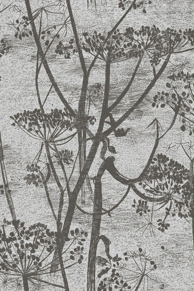 Cole & Son - Contemporary Restyled - Cow Parsley - 5 Colours Available - from Rockett St George