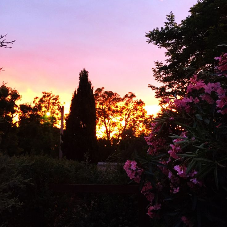Pretty in pink. Sunset and oleander working together. // Gardens On My Mind