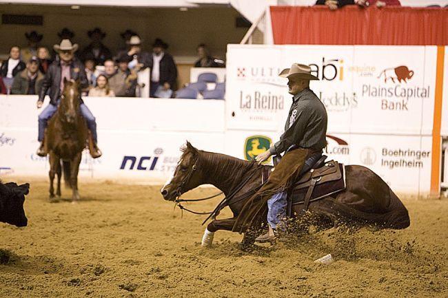 Cutting horse. This is incredible to watch and if you can hold on its amazing to ride!