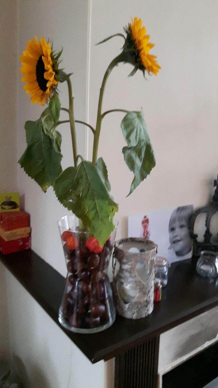 Smalle vaas voor zonnebloemen in brede vaas oa kastanjes