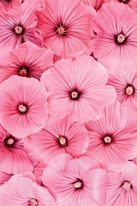 (via (94) Blossoms | Pinks | Pinterest) | chasingthegreenfaerie