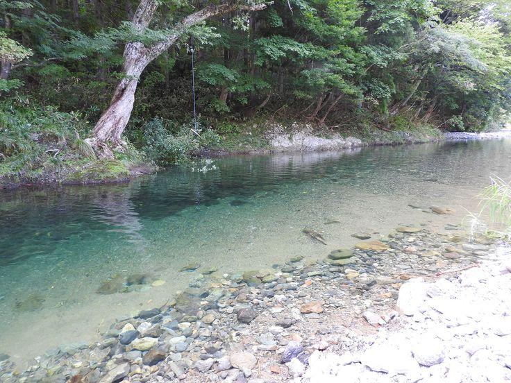 童心に帰って夏の日の川に遊ぶ【仙見川:新潟県】