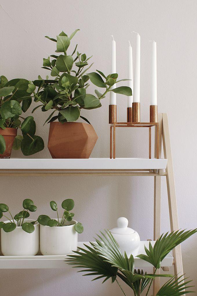 Klare Linien und Pflanzen lassen sich immer gut kombinieren. #pflanzenfreude
