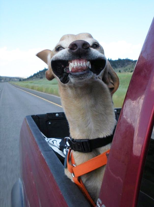 15+ Funny Dogs That Love Car Rides More Than Anything