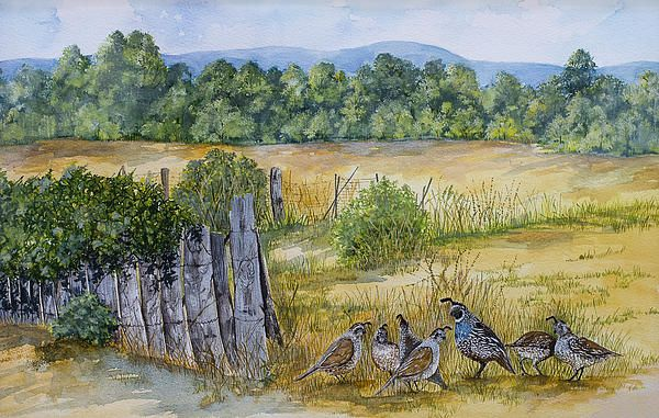 Quail and Fence by Virginia McLarens