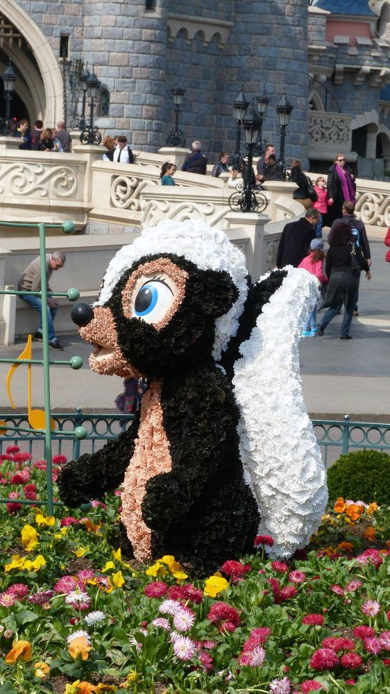 'Flower' the Skunk with thedreamtravelgroup.co.uk ...