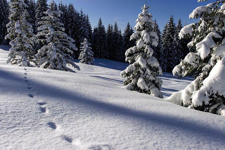 Tableau pas dans la neige