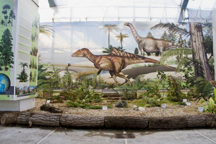 As Plantas do Tempo dos Dinossáurios Uma exposição onde é possível observar plantas que coabitaram com os dinossáurios.   museUnum@Museu Nacional de História Natural e da Ciência
